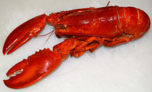 100 Fun Facts About Lobsters